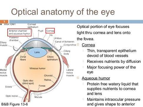 Optical Anatomy of the Eye