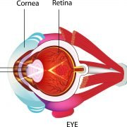 Knowing your Eyes Deeper: Parts & Functions of the Eye